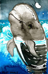 Pilot Whale by ghostyheart
