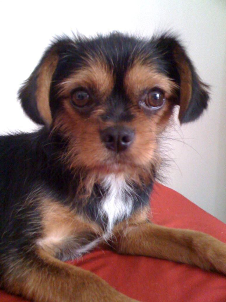 Dog by prudentia