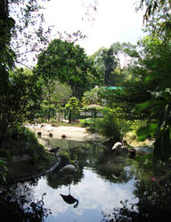 Flamingo Enclosure, HCMC Zoo by prudentia