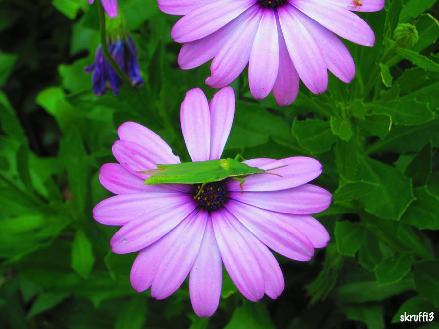 Flower by skruffi3