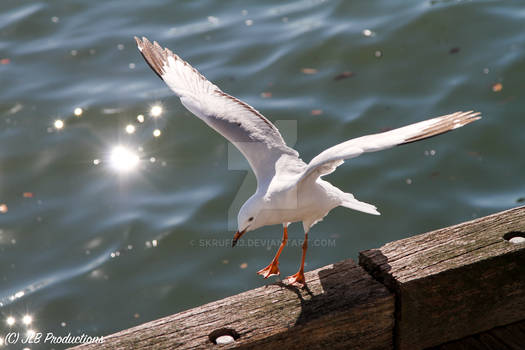 Seagull by the Seashore