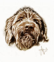 colorPainting staghound by ArthusokD