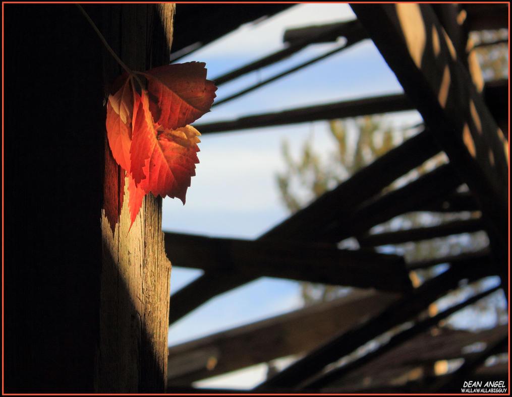 Leaf on a Post by wallawallabigguy