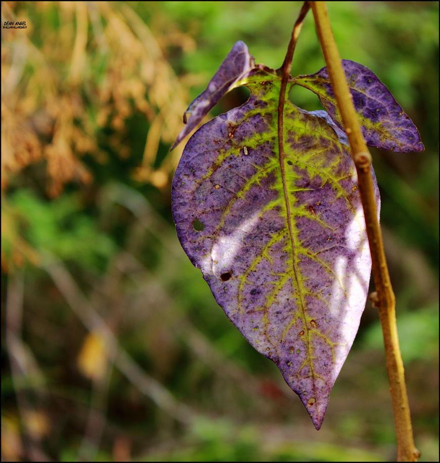 Blue Leaf by wallawallabigguy