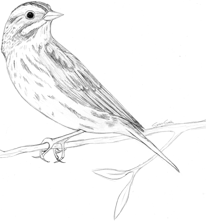 Simple sparrow drawings - photo#5