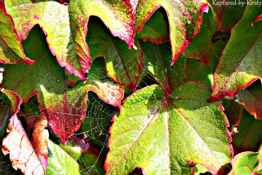 Cobwebs by Kaptured-by-Kirsty