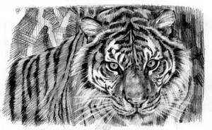 Tiger sketch by sabbathsoul