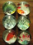 Koi Pond Glass Magnets