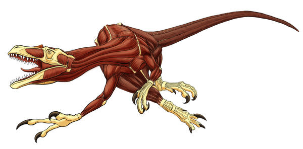 Dromaeosaurus Detail II by Art-Minion-Andrew0