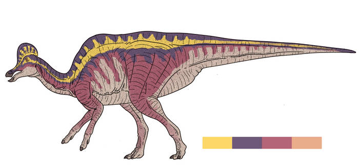 Corythosaurus Color Guide