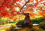 Japanese Maple, I
