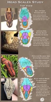 Reptile Headscales Study