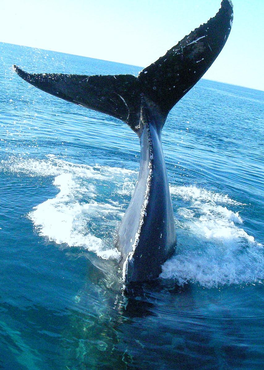whaletailforum