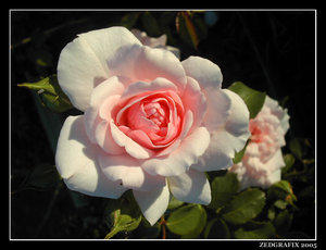 Little Rose by WouldSmellSoSweet
