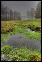 Swamp by rumun
