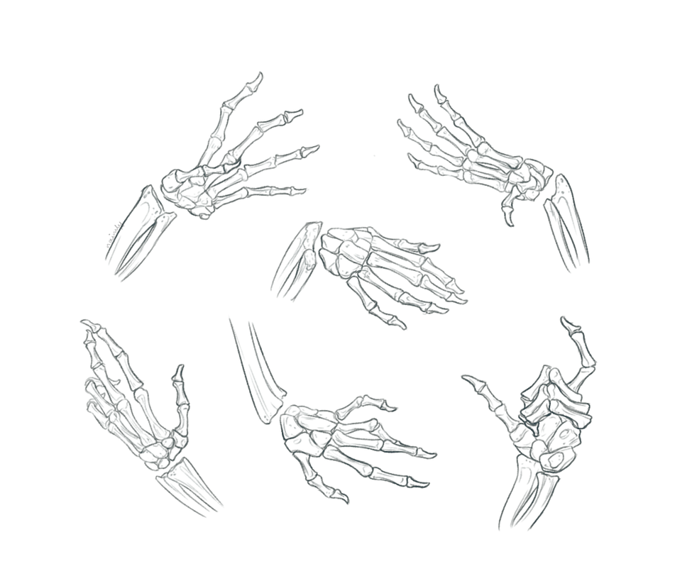 Hand Bone Anatomy Sketch Studies by Naimly on DeviantArt