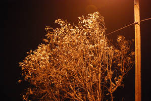 Street Lamp Tree Glow by Sageous