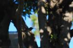 Hummingbird in Flight - 01