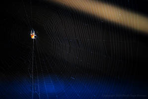 Spider in Blue by Sageous