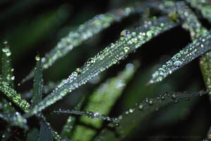 Sprinkler Do-A-Dew 02 by Sageous