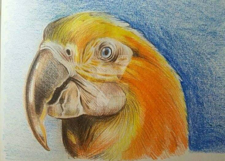 Golden Macaw by YoungLadyArt