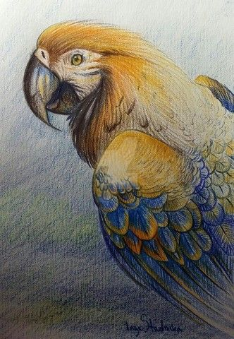 Parrots by YoungLadyArt