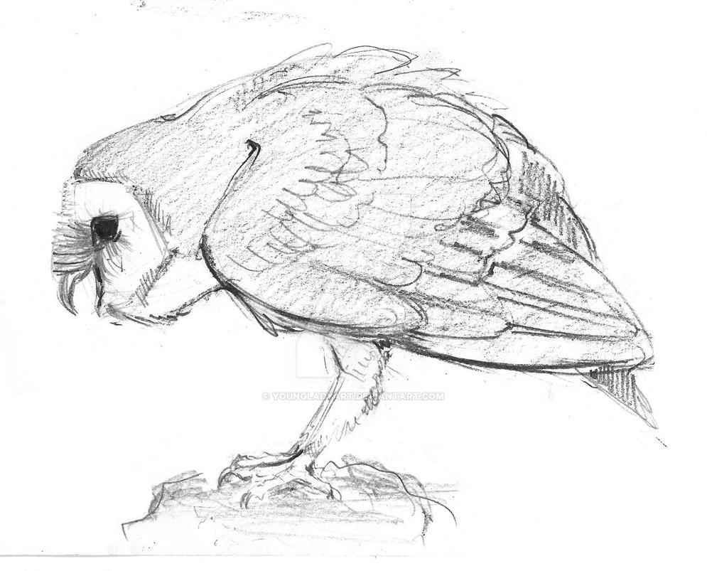 Barn owl - sketch 2 by YoungLadyArt