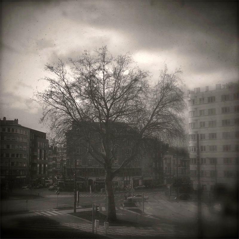 Tree Of Meiserplein by KizukiTamura