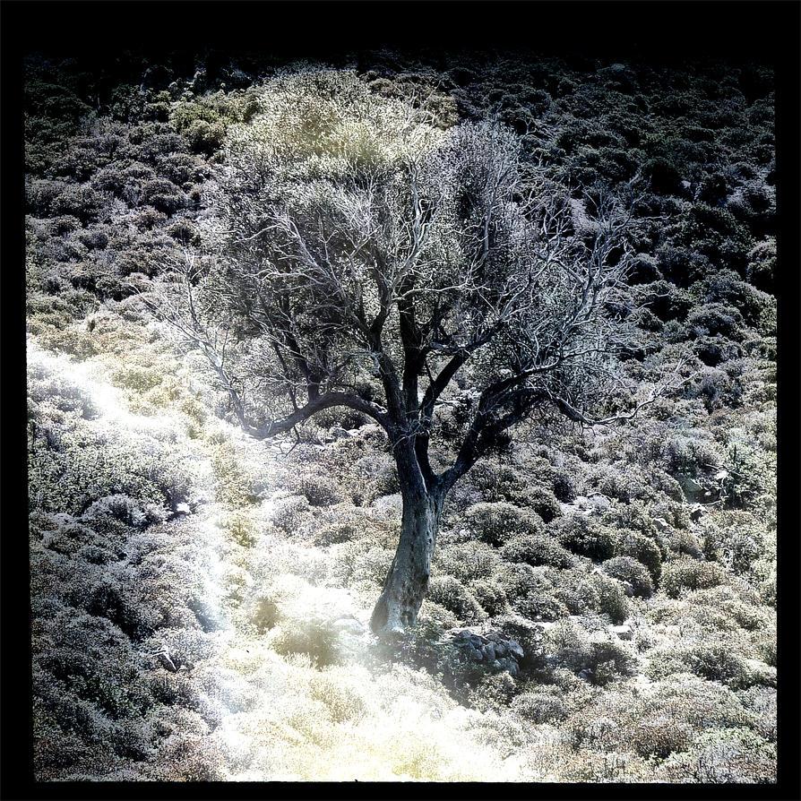 Alone In The Heath by KizukiTamura