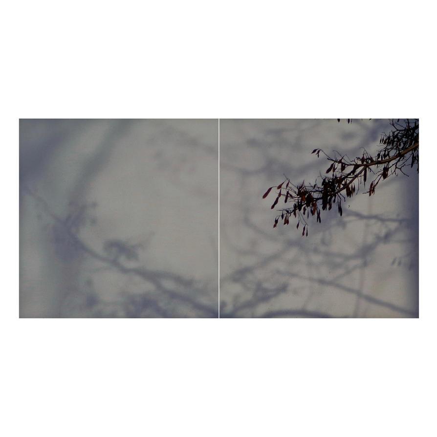 Roots And Thorns by KizukiTamura