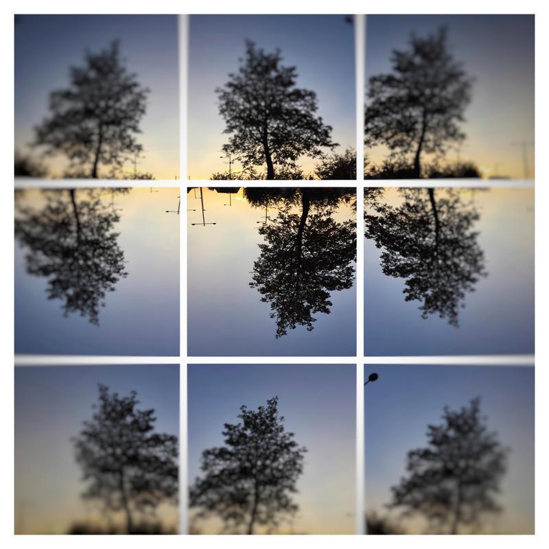 one tree dancing in a blurry sky by KizukiTamura