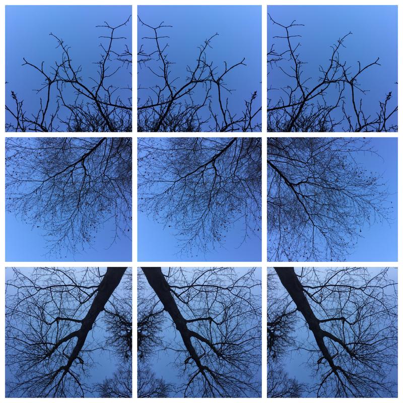 winter tree in a blue sky by KizukiTamura