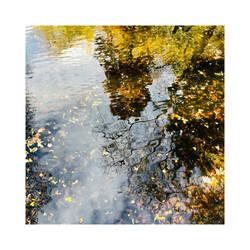 November Reflections | I