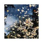 November Reflections | II