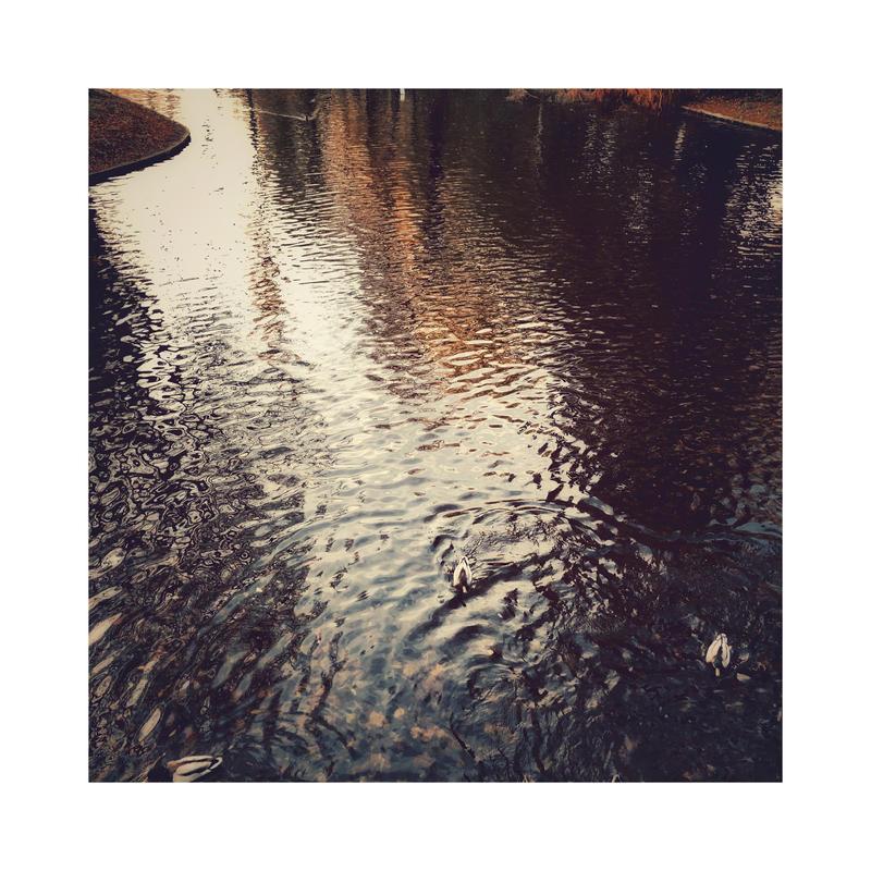 November Reflections | III