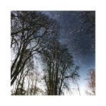 January Reflections | IV