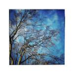 Winter Trees | I
