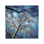 Winter Trees | II