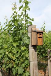 Birdhouse in the Vineyard