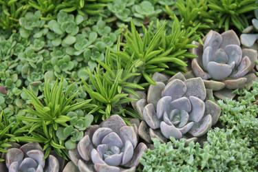 Succulents 4