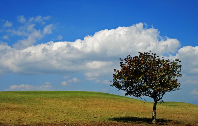 Pohon sendirian by pitajingga