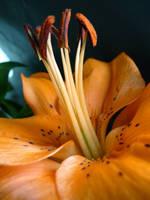 Tangerine Dream by Ph0t0-girl