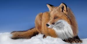A Fox by Brownie-frito