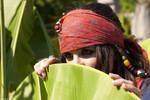 Elo Sparrow Jungle hide