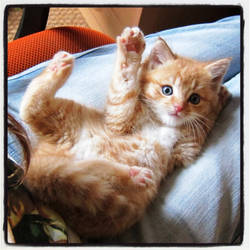Chili pose by elodie50a