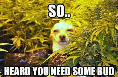 weed dog by Thomastruman
