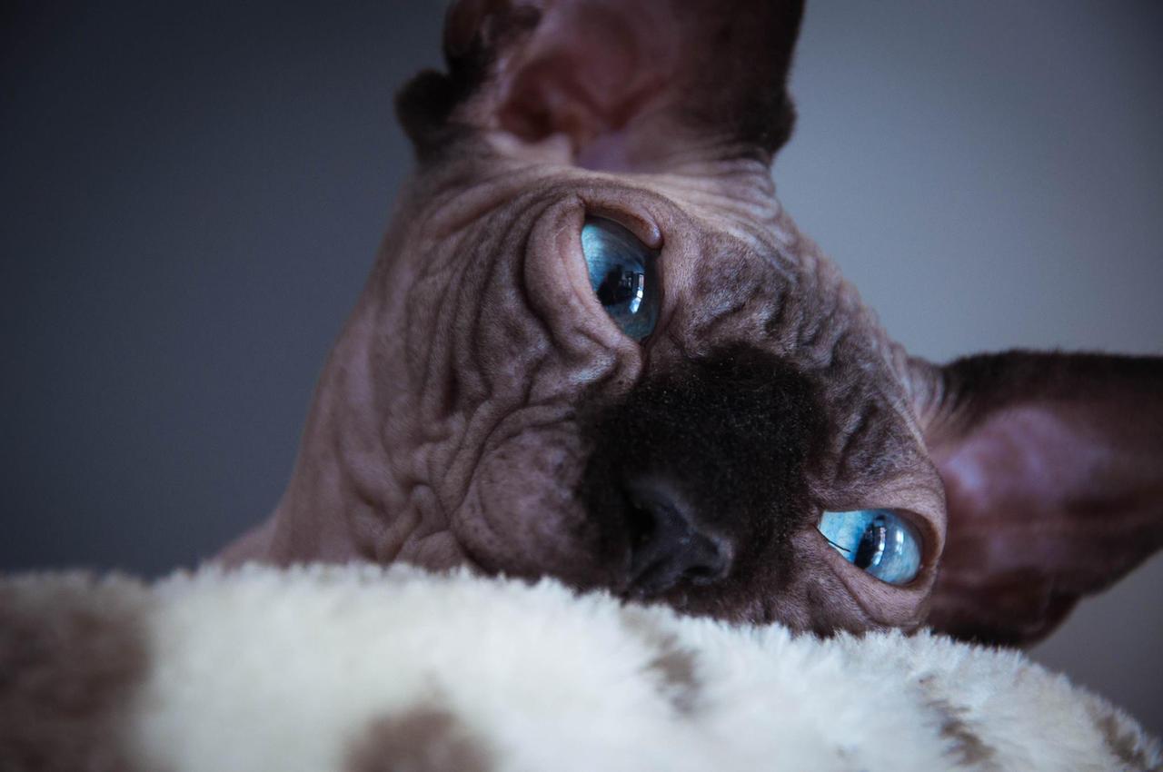 Eyes of its soul