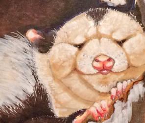 Cozy possum by PippinIncarnate
