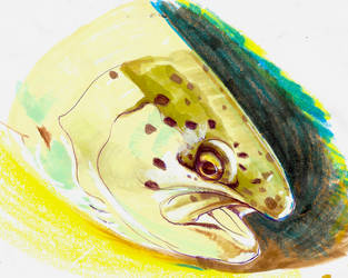 Trout Study by PippinIncarnate