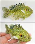 Redear fish